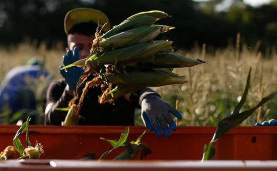Giá lương thực toàn cầu tăng nhanh nhất trong một thập niên