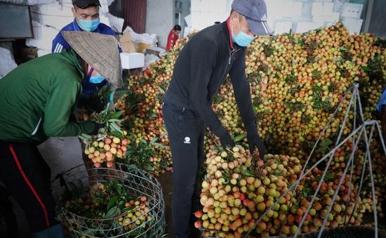 Bắc Giang thắng lớn vụ vải thiều năm 2021
