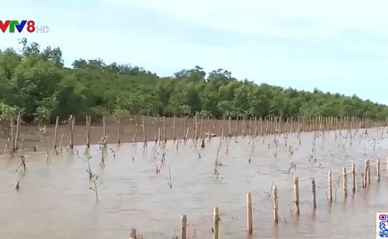 Thanh Hóa bảo vệ và phát triển rừng ngập mặn ven biển