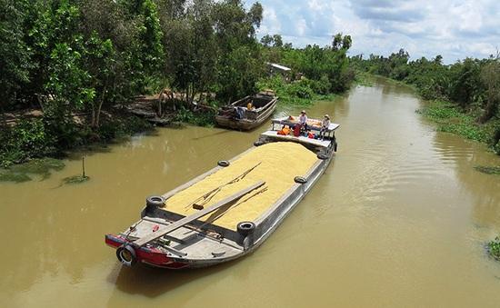 Mở rộng giao thông thủy vận chuyển lúa gạo