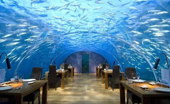 Ăn trưa với cá mập, cá đuối gai độc và rùa vây quanh ở Maldives