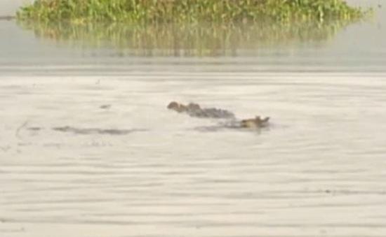 Khám phá lãnh địa cá sấu ở Bàu Sấu