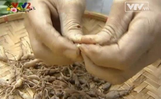 Tác dụng chữa bệnh của cây Mạch Môn