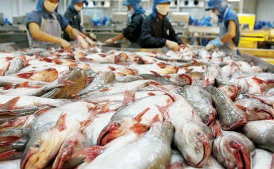 Xuất khẩu cá tra phải theo quy định mới