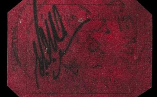 Con tem đắt nhất thế giới có giá 9,5 triệu USD