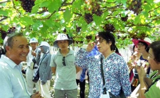 Lễ hội Nho và Vang 2014: Tôn vinh giá trị cây nho