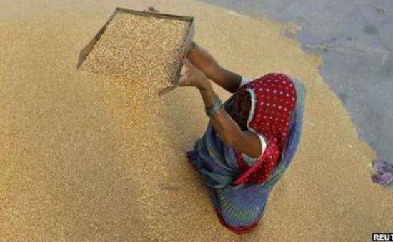 Ấn Độ thảo luận về dự luật an ninh lương thực