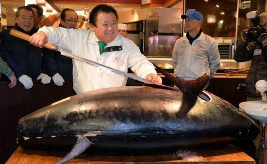 Nhật Bản: Đấu giá cá ngừ đầu tiên trong năm mới