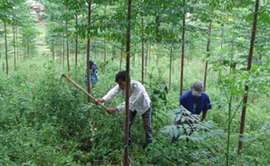 Mô hình Hội cựu chiến binh cùng nhau giữ rừng
