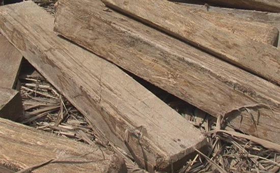 Khó xử lý tang vật gỗ trái phép