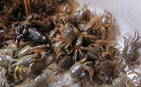 Thông tin thủy sản Hà Nội nhiễm kim loại nặng là không chính xác