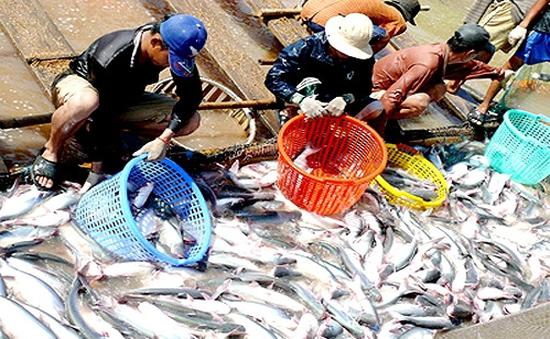 Thủy sản cho thị trường trong nước - Không dễ khai thác