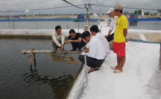 Nam Định: Tôm, ngao chết hàng loạt do nắng nóng