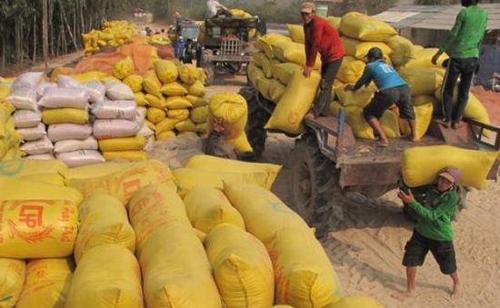 Sẽ mua tạm trữ 1 triệu tấn gạo vụ Hè Thu 2013