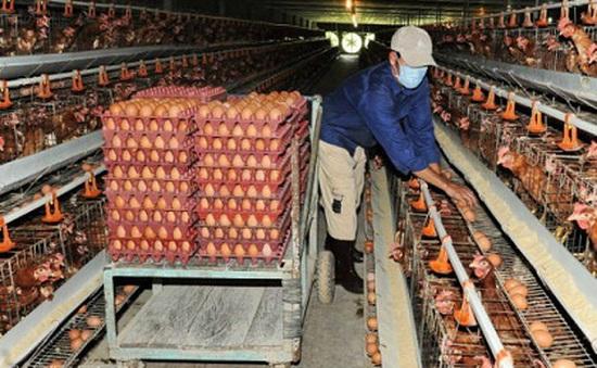 Ngành chăn nuôi lỗ 27.000 tỷ đồng