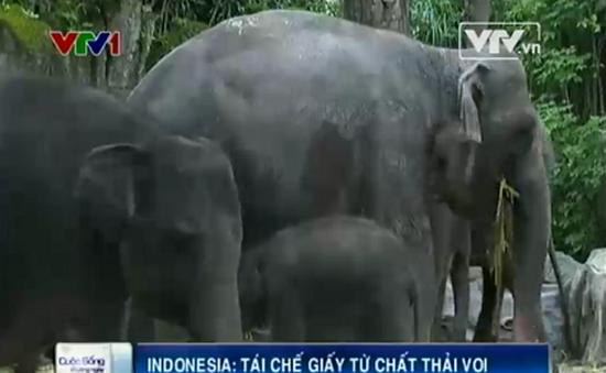 Indonesia tái chế giấy từ chất thải của voi