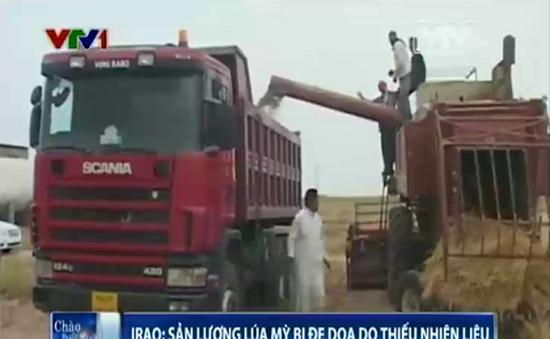 Sản lượng lúa mỳ của Iraq bị đe dọa do thiếu nhiên liệu