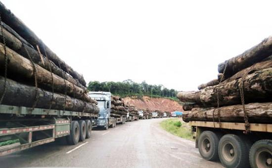 Gần 100 xe chở gỗ ùn tắc tại Cửa khẩu Quốc tế La Lay