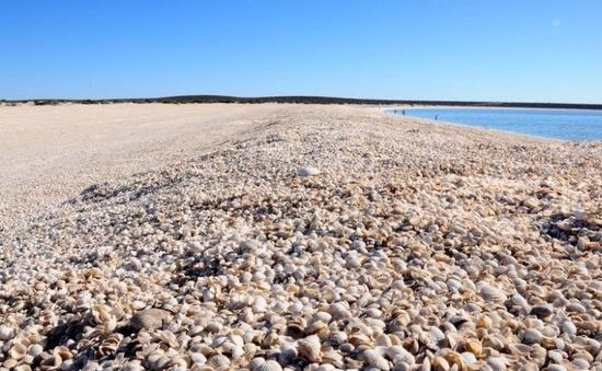 """4 bãi biển """"vỏ sò"""" độc đáo nhất thế giới"""