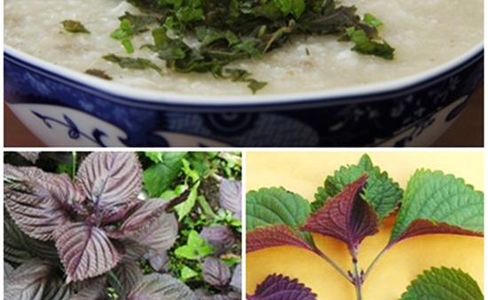 Tía tô - Dễ trồng và nhiều công dụng