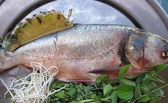 Công dụng chữa bệnh tuyệt vời của cá mè