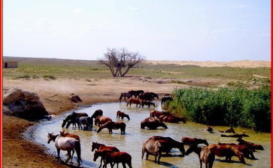Con ngựa trong đời sống của người Kazakhstan