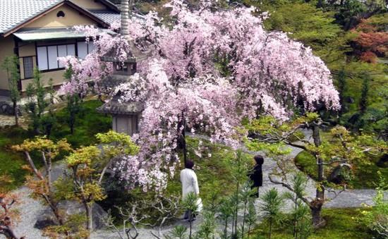7 công viên tuyệt đẹp của Nhật Bản