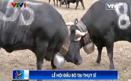 Kỳ thú cuộc thi Nữ hoàng bò ở Thụy Sĩ