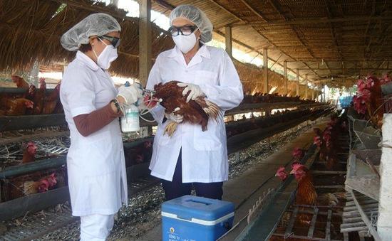 Đồng Tháp sẽ mua thêm 7 triệu liều vaccine H5N1