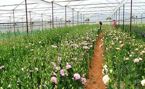 Thêm 5 loại hoa được cấp nhãn hiệu độc quyền