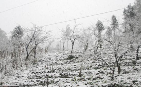 100% rau màu ở Sa Pa bị tuyết vùi lấp