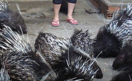 Các trại nuôi động vật hoang dã khó tìm đầu ra