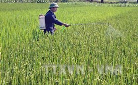 Cần Thơ: Hơn 9.500ha lúa Đông Xuân bị sâu bệnh