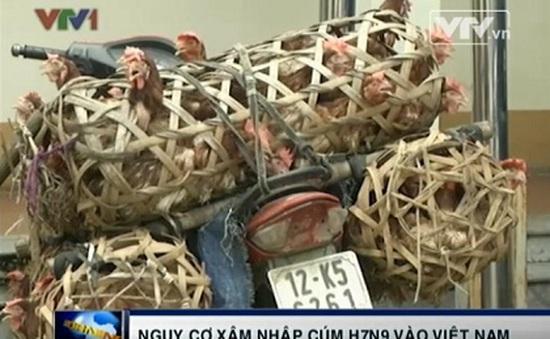 Nguy cơ cúm A/H7N9 xâm nhập vào Việt Nam là rất lớn