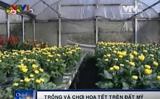 Người Việt trồng và chơi hoa Tết trên đất Mỹ