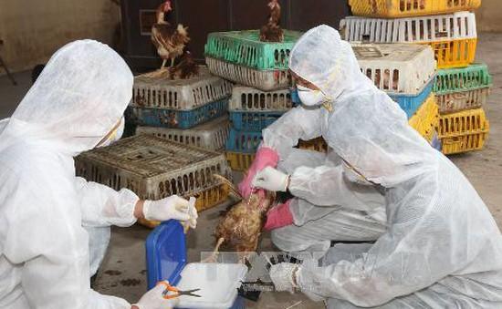 Bộ Y tế yêu cầu tăng cường phòng chống dịch bệnh do các chủng virus cúm