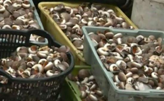 Ngư dân Hà Tĩnh được mùa hải sản đầu năm