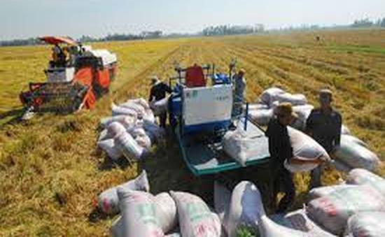 Bộ Tài chính ban hành giá thu mua đối với lúa tạm trữ năm 2014