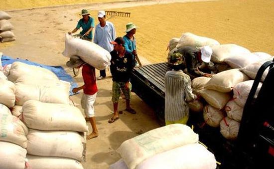 Thêm hai ngân hàng cho vay mua tạm trữ thóc, gạo