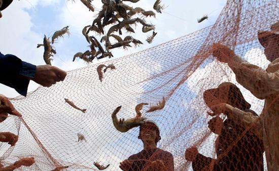 Nhiều hộ dân Cà Mau trúng đậm mùa tôm sú trái vụ
