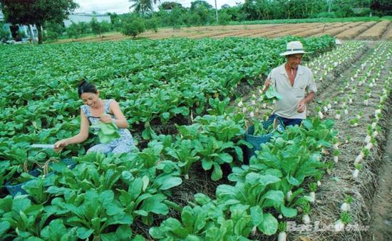 Năm 2014, đào tạo 300.000 lao động làm nông nghiệp