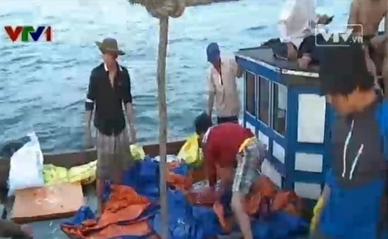 Nhộn nhịp vụ cá Nam trên Biển Đông