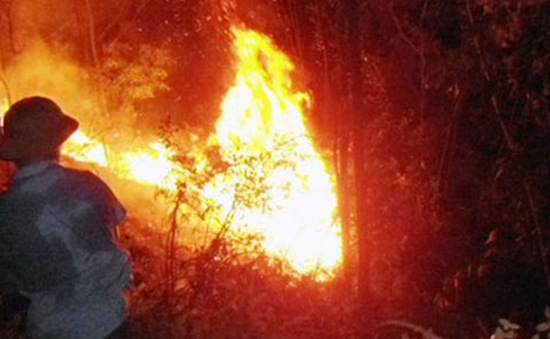 Nhiều khu vực tại 7 tỉnh, thành phố có nguy cơ cao về cháy rừng