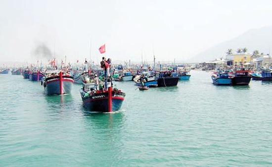 Quảng Nam được mùa hải sản