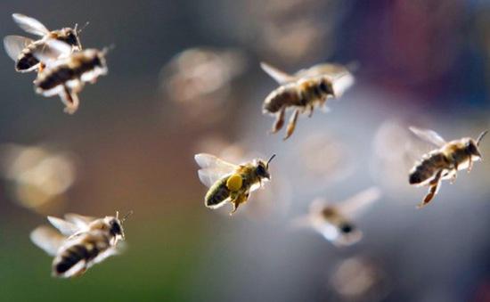 Bình Định: Bị ong vò vẽ đốt, 4 người thương vong