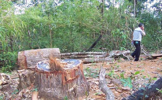Làm rõ trách nhiệm trong vụ phá rừng Gia Lai