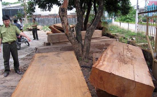 Bình Thuận bắt giữ hơn 10 khối gỗ quý hiếm không giấy tờ hợp pháp