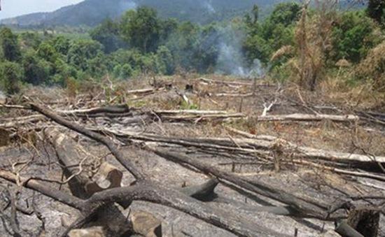 Rừng Khu bảo tồn Núi Ông đang bị tàn phá