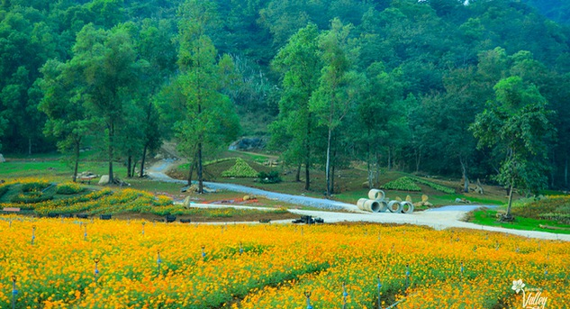 Flower valley is latest tourist attraction in Ninh Binh province