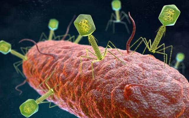 Phát hiện 70.000 loại virus chưa từng biết tới trong ruột con người
